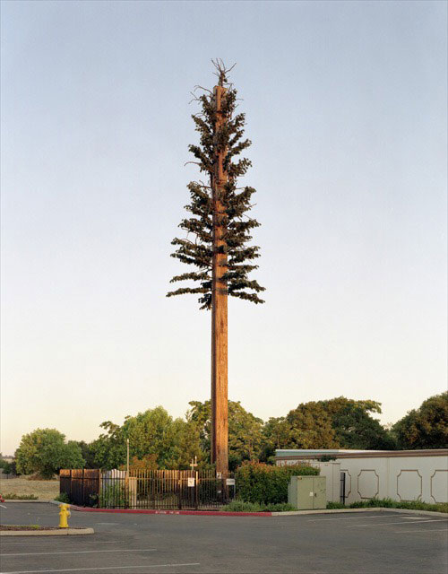 Cell-Tower-Tree-3