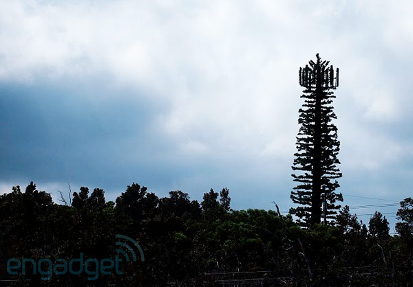 cell-tower-tree-disguise-hawaii-1317649274