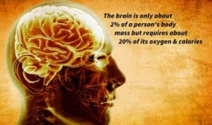 fun-science-facts-3