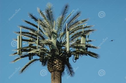 palm-tree-cell-tower-bird-507859