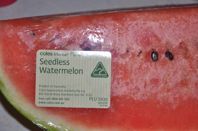 seedless watermelon with seeds in it dr heckle funny food pictures